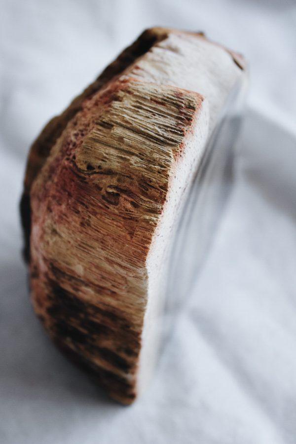 Xilópalo madera petrificada de la colección Selected Crystals de Fauna y Flora