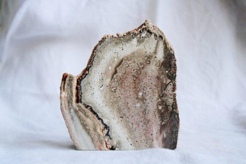 Xilópalo madera petrificada, minerales de la colección Selected Crystals de Fauna y Flora