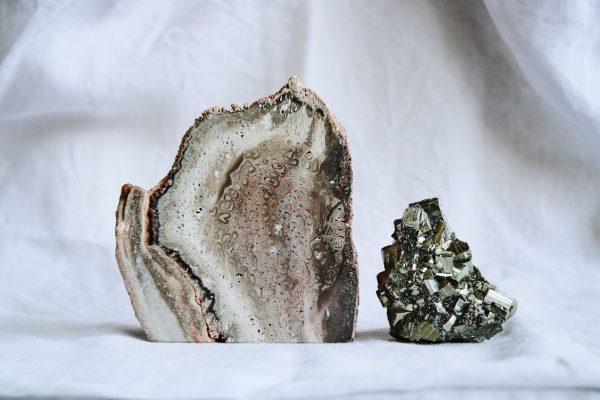 Xilópalo madera petrificada y Pirita, minerales de la colección Selected Crystals de Fauna y Flora